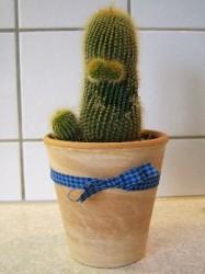 Mutter Kaktus