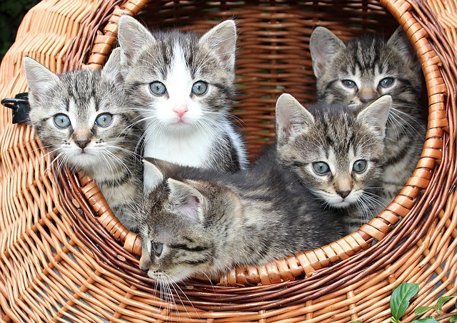 Katzenbabys Kitten Transport Box
