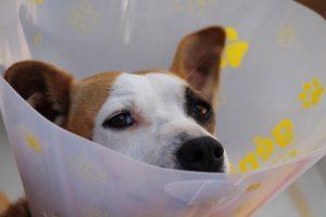 Bösartige Tumore Bei Haustieren