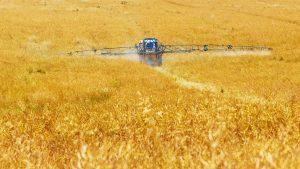Getreidefeld Ghemie gepritzt