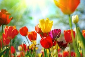 Lebenslust, Lebensfrust – was uns der Frühling beschert