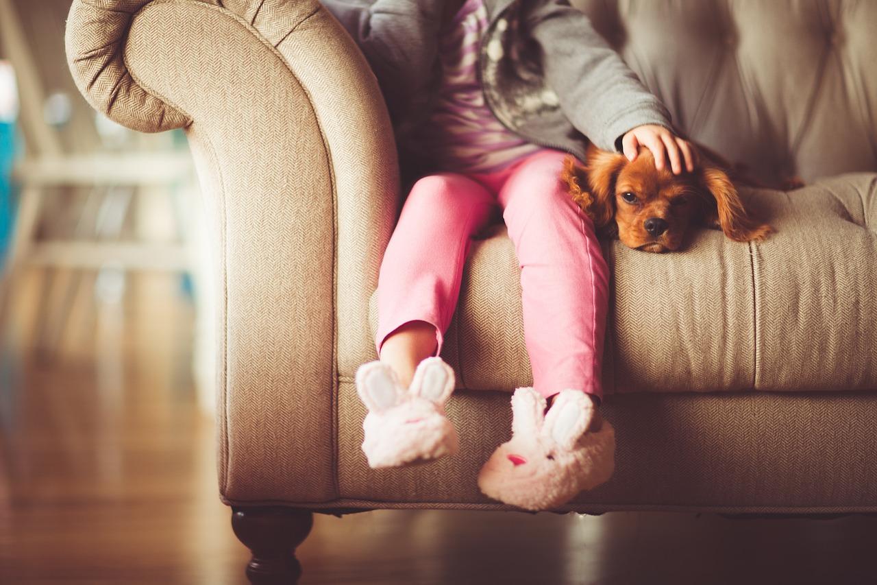 Beste Freunde-die Haustiere