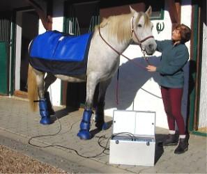Pferd Magnetfeldtherapie
