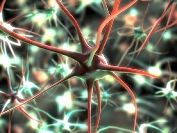 Hirnzellen