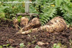 Gemüse aus dem Gewächshaus beinhaltet mehr Nitrat