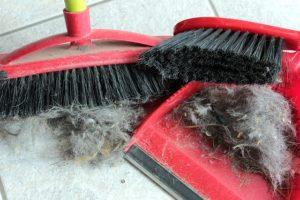 Schaufel Besen Tierhaar broom-1274401_640