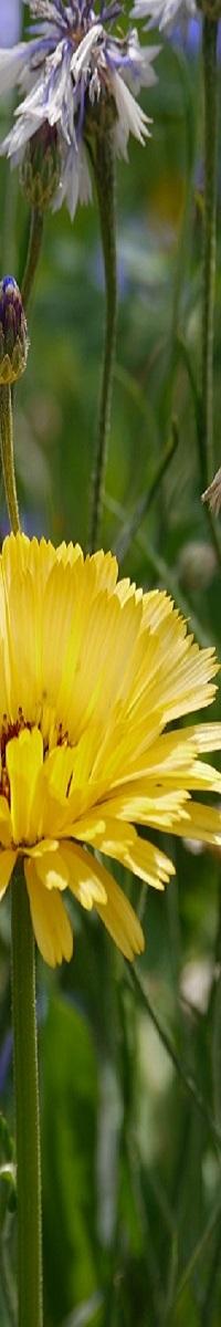 naturheilkunde-heilpraktiker-wiese-pixabay-200-1522592