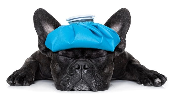 Tierheilpraktiker – Naturheilkunde in der Tiermedizin