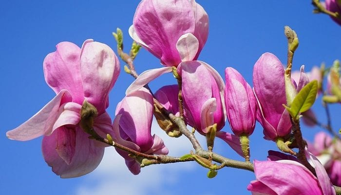 Frühling: Zeitumstellung, Spargelzeit, Aprilscherz, Vatertag und mehr