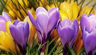 Quiz: Frühling: Neubeginn mit Begleiterscheinungen