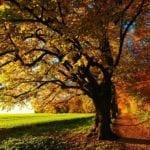 Quiz: Was Sie über den Herbst wissen sollten