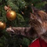 Weihnachten für Haustiere: Welche Geschenke können unter dem Baum liegen?