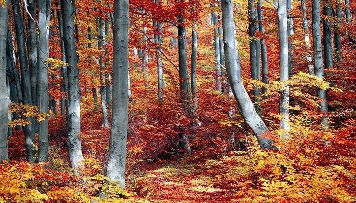 Waldweg im Herbst mit lauter bunten Blättern
