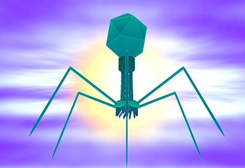 Ansicht einer Phage