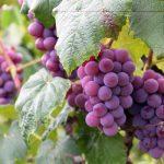 Wein, ein edler Tropfen, der es in sich hat