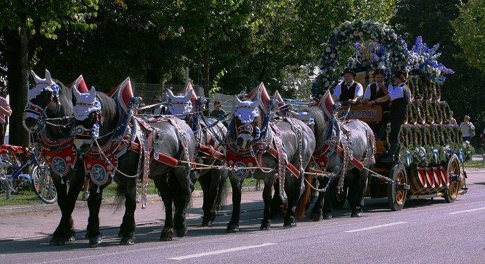 Oktoberfest Pferdegespann beim Einzug der Wirte