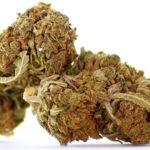 Cannabis wird salonfähig und findet breite Akzeptanz in allen Altersgruppen