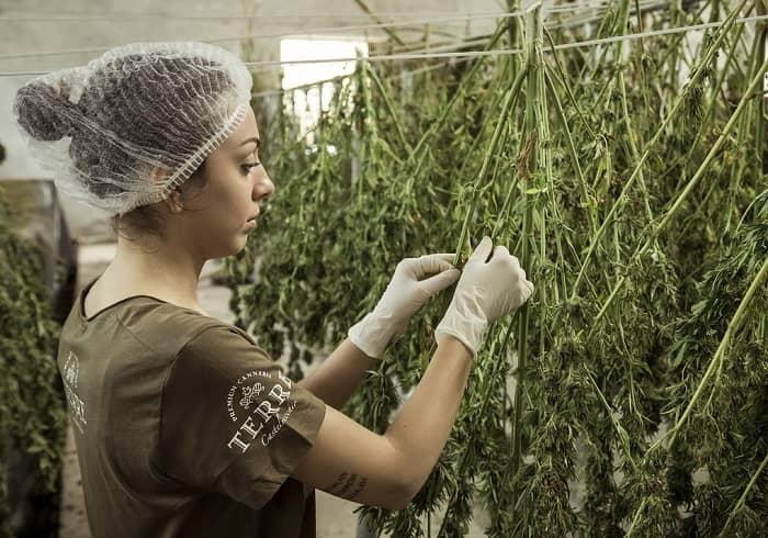 Frau in einer Halle, überwacht den Anbau von Cannabis