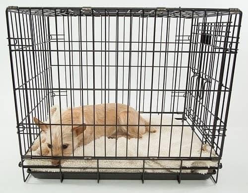 Hund liegt traurig in einem Käfig