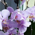 Die fünf besten Tipps für den Kauf neuer Pflanzen