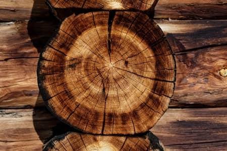 ein Baumstamm mit sichtbaren Jahresringen