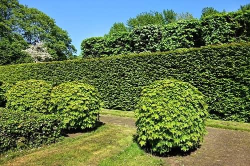 Ein Garten mit verschiedenen Bäumen, Büschen und einer Hecke