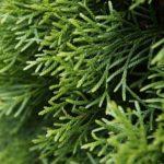 Heckenzauber – Wissenswertes zur Pflanzung einer Hecke