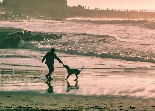 Ein Mann spielt mit seinem Hund im seichten Wasser des Meeres