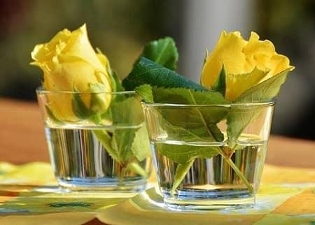 Gelbe Rosen stehen am Tisch in einem kleinen Glas